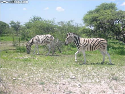 Namibia-24.jpg (C)2002